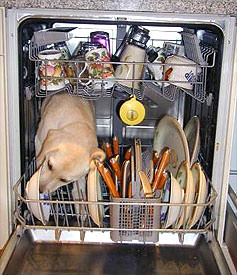 Environmental complexities of the modern dishwasher