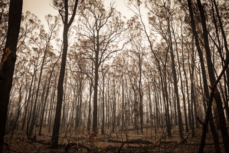 Smoke covers east Gippsland following devastating bushfires. (Photo by Chris Hopkins/Getty Images)