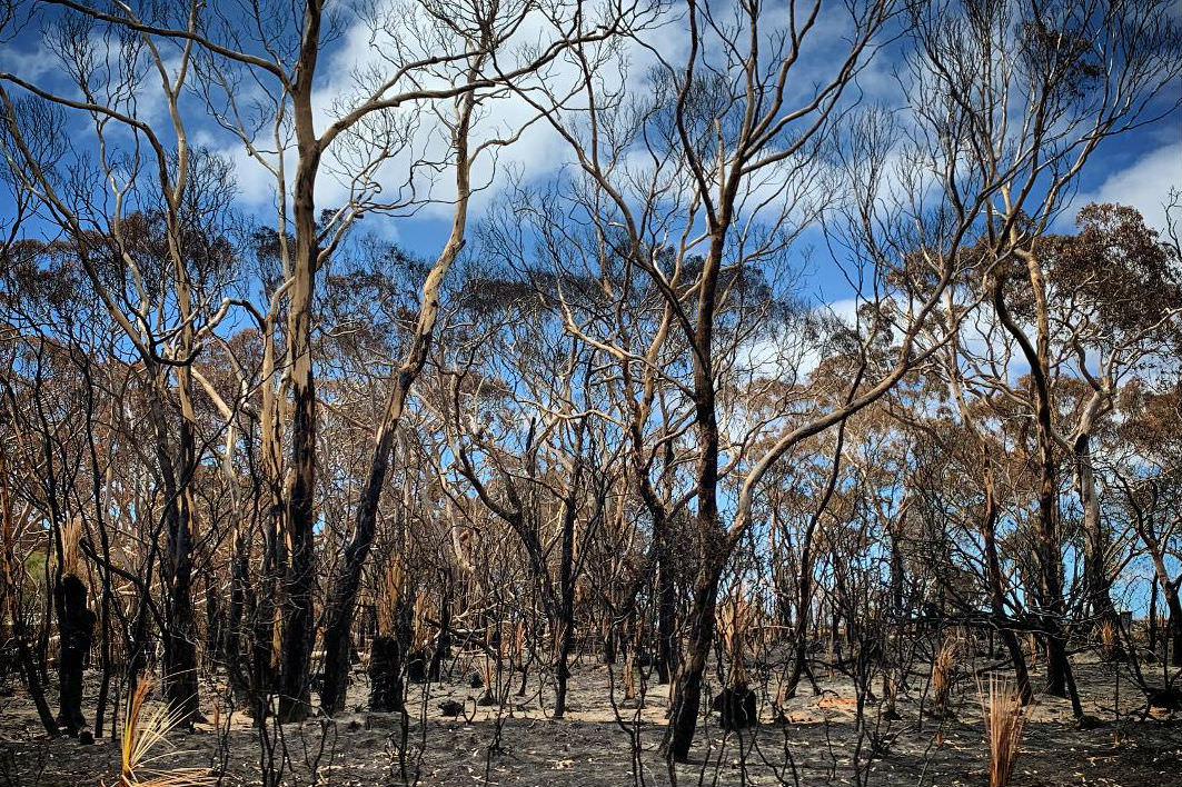 Burnt trees at Kangaroo Island (Photo by Monika Lancucki)