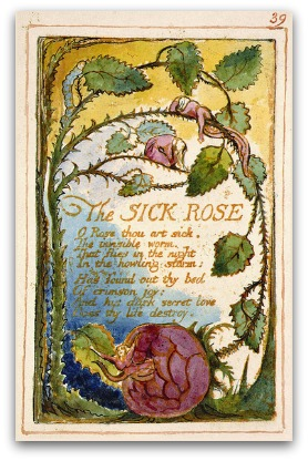 Rose with a worm in it, artistic depiction of Blake's 'The Sick Rose'
