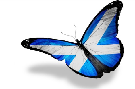 Butterfly with the colours of the Scottish flag on its wings