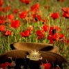 Military hat and poppies