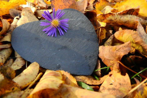 Stone heart with purple flower