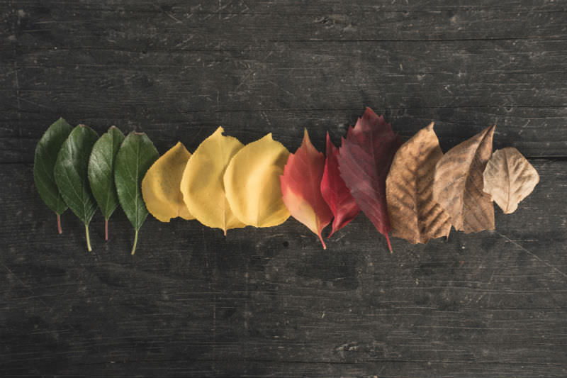 Leaves in different stages on a wooden table (optop/Getty)