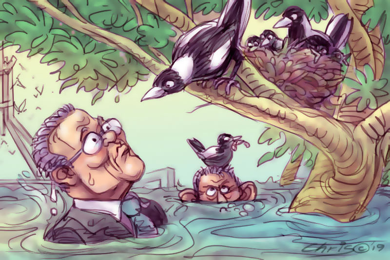 Scott Morrison stands shoulder deep in water while magpies look down on him from a tree. Cartoon by Chris Johnston