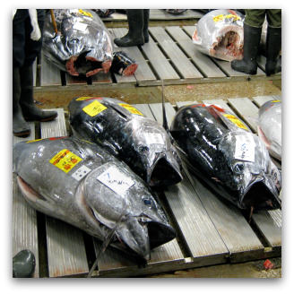 Tuna fish at Tsukiji market, Flickr image by Sanctu