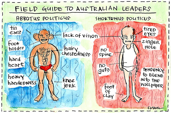 Fiona Katauskas' cartoon Body Politic compares the bodies of the two leaders Tony Abbott and Bill Shorten